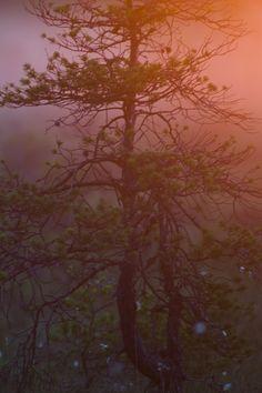 Morning Light #iPhone 4s #Wallpaper