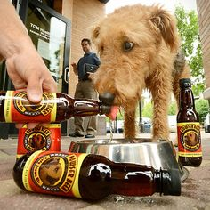 dog beer doggy ale
