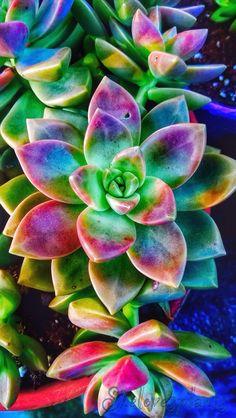 Weed,Succulents,Flowers Some Of This Some Of That Unkraut, Sukkulenten, Blumen Einiges davon Einiges davon Cactus Flower, Cactus Plants, Garden Plants, Flower Art, House Plants, Yellow Plants, Indoor Cactus, Cactus Seeds, Tulips Garden