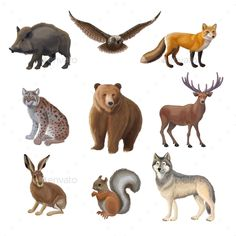Buy Cartoon Forest Animals Set by VectorPot on GraphicRiver. Cartoon forest animals set with wild boar owl fox lynx bear deer hair squirrel wolf isolated vector illustration. Jungle Animals, Forest Animals, Woodland Animals, Cute Animals, Wolf Images, Wolf Artwork, Wild Forest, Wild Boar, Watercolor Animals