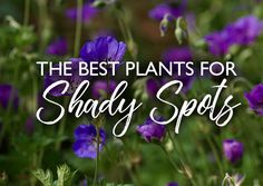We recommend the best plants to suit any sort of shady spot in the garden Best Plants For Shade, Shade Plants, Cool Plants, Ground Cover Plants, English Roses, Shrubs, Perennials, Advice, Suit