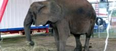 PLEASE HELP!!! SIGN TODAY!!! Tanya lived as a martyr for 23 years in the circus, beaten by her trainer. She managed to escape and unfortunately killed a man who was in her way. Transfer Tanya to a sanctuary in South Africa! LET TANYA LIVE!!! | Please SIGN and share petition for Tanya! Thanks.