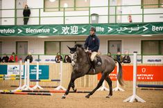 Andrew Nicholson: how to teach a horse to think for himself - Horse & Hound