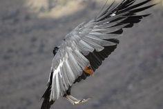 Fly like an eagle:   Michael Kunze - Astronomie - Reisen - Fotografie
