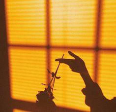 yellow, shadow, and rose image Orange Aesthetic, Aesthetic Colors, Aesthetic Photo, Aesthetic Pictures, Aesthetic Pastel, Aesthetic Collage, Fred Instagram, Yellow Theme, Jolie Photo