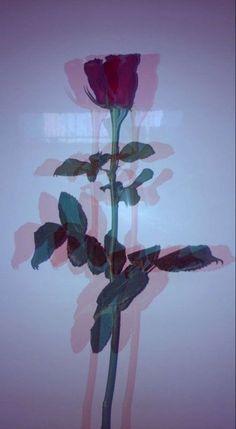 flower aesthetic 38 Ideas for flowers aesthetic grunge red Glitch Wallpaper, Tumblr Wallpaper, Rose Wallpaper, Aesthetic Iphone Wallpaper, Lock Screen Wallpaper, Wallpaper Backgrounds, Aesthetic Wallpapers, Nature Wallpaper, Tumblr Background