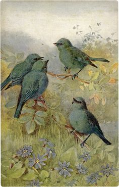 Old Postcard of Adorable Tiny Blue-Green Birds Image! - The Graphics Fairy Images Vintage, Vintage Pictures, Vintage Cards, Illustrations, Illustration Art, Paperclay, Old Postcards, Bird Prints, Bird Art