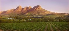 Find your next wine destination South African Wine, Wineries, Plan Your Trip, Red Wine, Vineyard, Outdoor, Outdoors, Wine Cellars, Outdoor Games