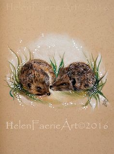 Art Print (27 x 19 cm) From my original Pencil Drawing 'Hedgehog Wild' Hedgehog, Wildlife, Nature, Forest, Animal art, Illustration by HelenFaerieArt on Etsy