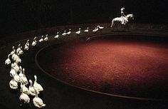 Bartabas - Zingaro Equestrian Theatre