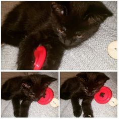 Hair Bobbles, not just for your hair, great cats toys too! 🤣 #Buttons🐾 has taken a liking to them! At least it's not in my hair this…