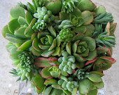 Quote for Minnie Plus   Succulent Wedding by SucculentSolutions, $495.00