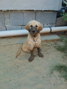omg! did you see the mud scattered in the house?? those silly little puppies just gets on my nerves sometimes :D