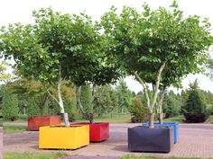 boompje voortuin | Ten Hoven Tuinen - Bomen in bakken