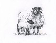 sheep realistic drawing step by step - Google Search
