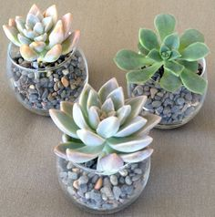 Wedding favor idea - would need succulents, glass vases and rocks.