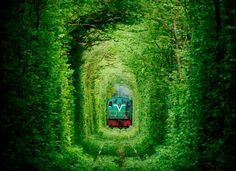 There are some places around the world that really catch our attention. One of this places it the Tunnel of Love, a train tunnel made entirely of trees. Le Tunnel, Train Tunnel, Tunnel Of Love Ukraine, Photo Japon, Places To Travel, Places To See, Magical Tree, Destination Voyage, Train Tracks