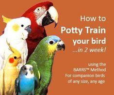How to Potty Train a Bird #aviariesideas #buildaviary
