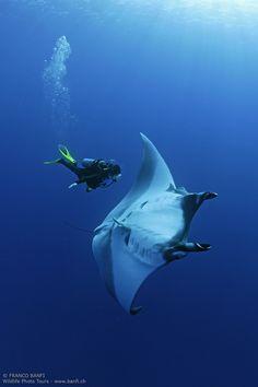 scuba diver and manta ray, Manta birostris, San Benedicto, Revillagigedo (Socorro) Islands