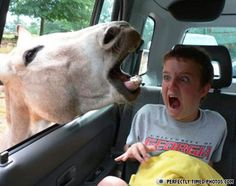 Funny photos, perfectly timed photos, horse in car window face boy Cute Funny Animals, Funny Animal Pictures, Funny Photos, Funny Images, Horse Pictures, Funniest Animals, Bing Images, Hilarious Pictures, Animal Pics