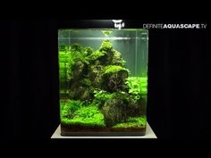 ▶ Aquascaping - The Art of the Planted Aquarium 2013 Nano compilation - YouTube---I'm so setting one up in my office when I open my own practice