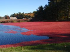 "Mayflower Cranberries in Plympton, MA... Every fall, they have limited spots for a ""Be the Grower"" tour where they take 2 people at a time for 2 hours out into the bogs to harvest cranberries. This would be a great 2 year anniversary trip!"