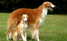 7.26.14-Most-Interesting-Looking-Dogs11.jpg
