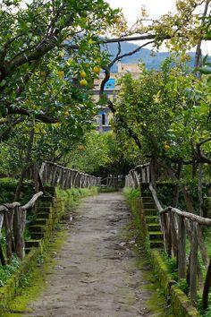 Cataldo lemon grove. Sorrento, Nov 2013.
