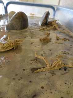 dinosaur swamp -- (wet sand) and another project: make imprints in clay with toy dinos fill with plaster of paris Dinosaurs Preschool, Preschool Science, Dinosaur Dig, Dinosaur Party, Infant Activities, Activities For Kids, Spring Animals, Sensory Tubs, Tuff Tray