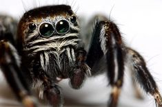 Photo: Close view of a black spider