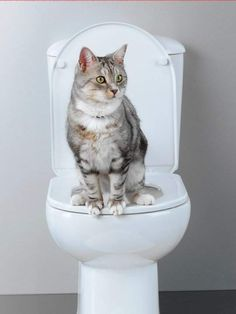 Cat Items - Need Good Advice About Cats? - Cat and Kittens Cute Cats, Funny Cats, Cat Toilet Training, Potty Training, Cat Health Care, 10 Interesting Facts, Son Chat, Cat Hacks, Cat Pee