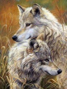 Shop for wolf art from the world's greatest living artists. All wolf artwork ships within 48 hours and includes a money-back guarantee. Choose your favorite wolf designs and purchase them as wall art, home decor, phone cases, tote bags, and more! Artwork Lobo, Wolf Artwork, Wild Life, Beautiful Wolves, Animals Beautiful, Cute Animals, Wolf Love, Two Wolves, White Wolves