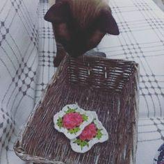 Mufit the explorer! #cat #catlove #catlover #catsofworld #catstagram #catsofinstgram #siamese #siamesecat #siyamkedisi #siyam #siamesecatsofinstagram #crochetflower #crochetblanket #crochetsquare #mufitkedisi #muhitkedisi by madamroksalan