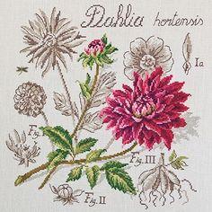 Étude au Dahlia - Linen