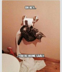 Picture # 254 collection funny animal quotes pics) for June 2016 – Funny Pictures, Quotes, Pics, Photos, Images and Very Cute animals. Funny Animal Quotes, Funny Animal Pictures, Cute Funny Animals, Funny Cute, Funniest Animals, Cat Quotes, Funny Photos, Super Funny, Clean Animal Memes