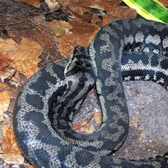 1000 images about snakes on pinterest python aztec and