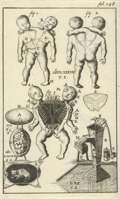 "Anatomical illustration by Jan Luyken and Jan Claesz ten Hoorn from ""Collectanea medico-physica"" by Steven Blankaart (1690), digitized by the Rijksmuseum"