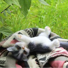 Пока погода позволяет, отдыхаем на улице. Котенок сделан на заказ. #котики #котенок #сухоеваляние #cat #kitty #feltingwool #animals
