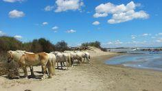 Promenade a cheval, Camargue