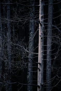 "desolate-nature: "" By Pela Schmidt """