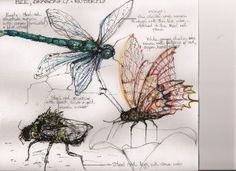 Designs for giant insect steel and wire sculptures, soon to be created - by Fiona Campbell