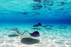 Cayman Islands: Stingray City-DD