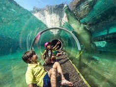 Experience 'Florida: Mission Everglades' at Zoo Miami - TripsToDiscover.com
