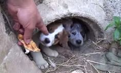 Man Keeps Promise To Dying Dog That He'll Save Her Terrified Puppies