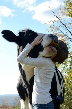 """Have you hugged a cow today?  Just say """"thanks for the milk, yogurt, cheese, and ice cream""""."""