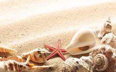 Bildergebnis für shells