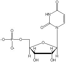 RNA is a nucleic acid comprised of a nitrogenous base, a phosphate group, and a ribose sugar. RNA is synthesized from DNA in a process called transcription.