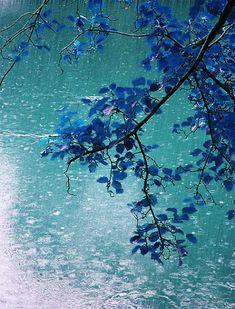 sobre azul escurecido de folhas chove um tempo . entre pingos me re.parto . espreito círculos concêntricos que me tocam em absoluto . mira: pássaros escondidos na beleza do instante . frio ausente conspira com ventos inexistentes . gotas se apegam em um pouco de lilás . nem dia nem noite assumem tal hora . talvez correnteza abstrata conduza teu riso . [...] Andréa Mascarenhas