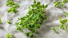 Majorán zo záhradky: Ako ho pestovať a využiť? California Native Plants, Sandy Soil, Axl Rose, Edible Garden, Kraut, Korn, Herb Garden, Parsley, Tex Mex