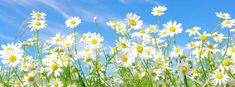 Free Facebook Cover Photos Flowers - The Best Flowers Ideas